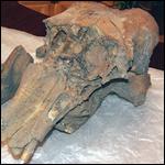 Кости мамонта попросили признать полезными ископаемыми
