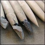 Ученые испытали мощь оружия каменного века