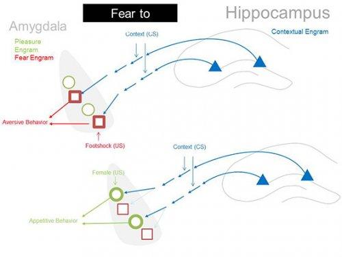 Нейрофизиологи поменяли эмоциональную окраску воспоминаний на противоположную