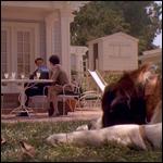 Ученые измерили влияние фильмов на популярность различных пород собак