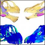 Крупнейшие динозавры делили дефицитные пищевые ресурсы без конфликтов