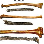 Самым древним парижанином назвали неандертальца