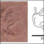 Российский геолог нашел следы динозавров в африканском алмазном руднике