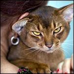 Генетика пролила свет на уникальность домашних кошек