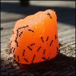 Ученые рассказали о пользе муравьев и пауков для человека