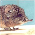 За 2014 год учёными открыт 221 вид живых существ