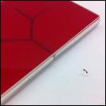 Биологи объяснили левостороннюю ориентированность муравьев