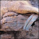 Египтяне обиделись на американских ученых за «миллион мумий»