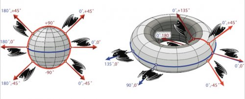 В мозге млекопитающих обнаружен трехмерный компас
