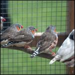 Американские биологи опоили птиц
