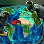 Ученые доказали факт миграции обезьян в Америку на растительных плотах