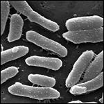В организме человека нашли гены грибов и вирусов
