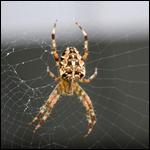 Страх пред пауками назвали ценным эволюционным преимуществом