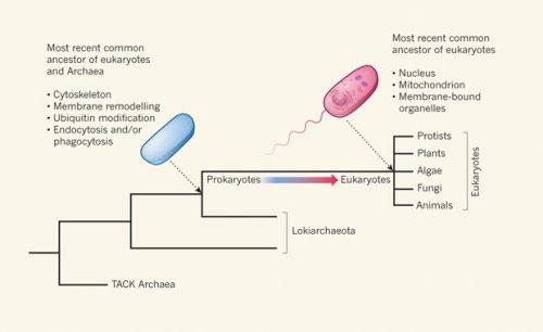 Ученые нашли недостающее звено в эволюции многоклеточных