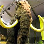 Ученые определили вес древних мамонтов и ленивцев