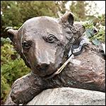 Ученые нашли причину смерти полярного медведя Кнута