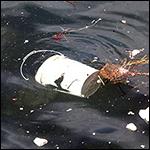 В желудках 90 процентов морских птиц нашли пластик