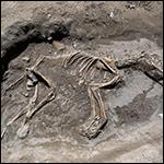 Турецкие археологи нашли скелет собаки в древней столице Урарту