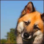 Найдена родина первых собак