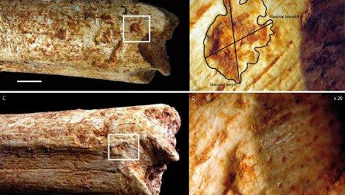 """Ученые нашли следы древнейшей """"войны"""" между хищниками и людьми"""