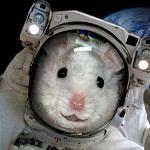 На международной космической станции проведут эксперимент с заморозкой мышей