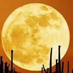 На Луне обитают пришельцы ?