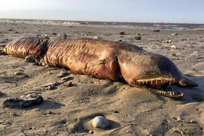 В Техасе на пляж выбросило загадочное существо