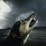 Мистические истории о собаках - правда ?