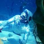 Человек способен дышать под водой