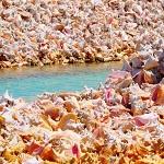 Удивительный островок из раковин моллюсков в Карибском море