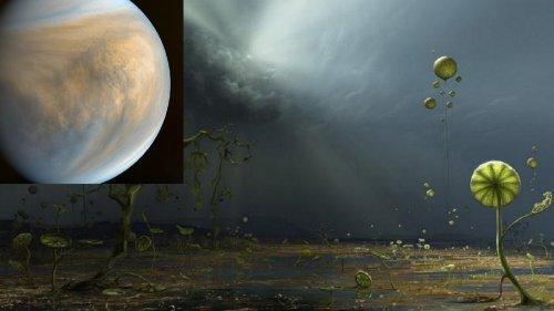 Венера Могла Быть Первой Обитаемой Планетой